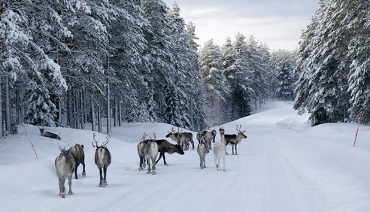 article-gotta-joga-yoga-app-apple-reindeers-shutterstock_160978433