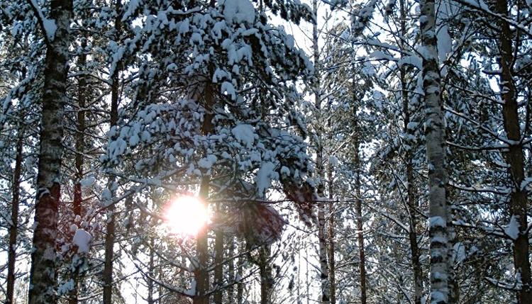 article-snow-lumi-löydä-scandinavia-practice-yoga-gotta-joga-app-apple-app-store