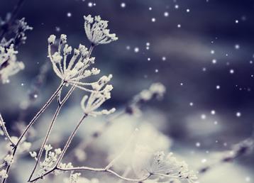 frozen-flower-beitrag-loeydae-scandinavia-gotta-joga-shutterstock