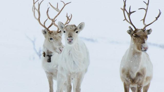 gotta joga yoga app apple iphone reindeers lapland